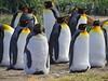 Aptenodytes patagonicus (Mono Andes) Tags: patagonia chile regióndemagallanes tierradelfuego bahíainútil parquepinguinorey animal ave pájaro pinguino