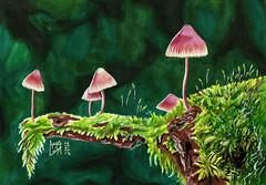 Mushroom (Anna Luiza Aragão) Tags: cor color magiccolors marker markers marcadores colorfull illustration draw drawning sinoart leplume cogumelo mushroom fungi fungo musgo moss ludico magic nature natureza pencil colorpencil lapisdecor