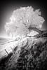 Variation autour d'un arbre #3 (jeje62) Tags: frencq ir irshoot ir720 arbre canon cotedopale digitalinfrared infrared infrared715nm infrarouge littoral trees village