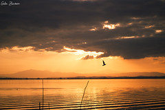 Lago Trasimeno - San Feliciano (Giulia Zucchero) Tags: landscape lake trasimeno perugia umbria igers sunset bird fire colorful sunsethub travel travelph
