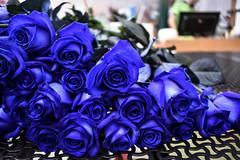 Blue Roses (CesareZucco) Tags: blue blu roses rose flower fiore nature natura light luce nikon beauty bellezza elegance eleganza corolla petals petali scent fragrance profumo