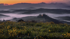 Spring is here. (Massetti Fabrizio) Tags: sunrise sun sunlight sunset sanquirico siena phaseone pienza panorami tuscany toscana tree iq180 italia italy landscape landscapes light spring fog fabriziomassetti famasse red rural rodenstock rosso yellow giallo green