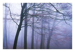 Blickling Wood 28/03/2017 (Matthew Dartford) Tags: eastanglia matthewdartford atmospheric backlight bokeh branch depth fog foggy forest landscape mist misty morning morninglight norfolk spooky tree trees trunk woodland woods