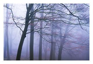 Blickling Wood 28/03/2017