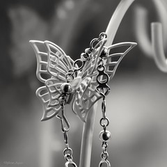 Fastner (Different Aspects) Tags: macromondays fastner bracelet butterfly monochrome 7dwf mondays freetheme