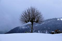 It was snowing in Swiss mountains (natureloving) Tags: winter snow switzerland swissmountains nature tree landscape natureloving nikon d90 europe nikonafsdxnikkor18300mmf3563gedvr