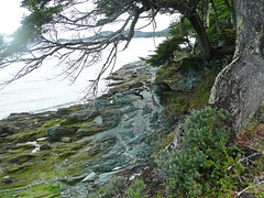 Coastal outcrop (Ensenada Bay, Tierra del Fuego National Park, Argentina) 2