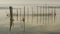 Redes de pesca en la Gola, Valencia. (:) vicky) Tags: valencia redolí red reflections reflejos lagola agua atardecer albufera airelibre comunidadvalenciana