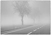 Foggy drive 5 (Jerzy Durczak) Tags: driving road fog trees