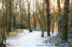 Sunny path (ChristineGibbs) Tags: canon eos eos6 canon24105mm leicestershire hinckley snow landscape sunlight burbagecommon burbage path trees burbagecommonwoods