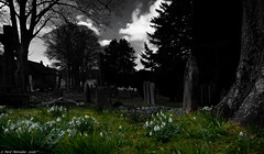 Down Among The Dead Men (Neil. Moralee) Tags: chagfordneilmoralee neilmoralee grave stones trees flowers spring dark mono dead grass sky clouds church chagfoed devon uk spotcolour color spotcolor springtime bloom snowdrop galanthus blue bell bluebell