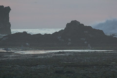 IMG_2963 (armadil) Tags: mavericks beach beaches californiabeaches scenic sunset