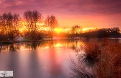 Frozen Longholme Sunset (Rob Felton) Tags: thegreatouse theembankment lake river bedford bedfordshire robertfelton felton tree trees shadows longholme winter sunset sun flare frozen ice goldenhour reflection reeds