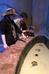 discovery! (domit) Tags: dubai uae thepalm atlantis isaac aquarium jay