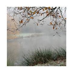 Un matin près de chez moi (Yvan LEMEUR) Tags: brume brouillard hiver branches etang extérieur froid matinbrumeux matin landscape paysage saisons
