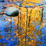 Golden Tree Reflection thumbnail