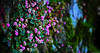 This side (Blas Torillo) Tags: cuetzalan puebla méxico mexico flores flowers naturaleza nature belleza beauty fotografíaenlacalle streetphotography popsofcolor colores colors luznatural naturallight fotografíaprofesional professionalphotography fotógrafosmexicanos mexicanphotographers nikon d5200 nikond5200