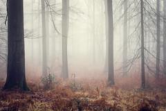 Misty Forest (Thomas Vanderheyden) Tags: misty forest misthyque ambiance feerique elfes nature foret paysage landscape fog brume brouillard thomasvanderheyden fujifilm