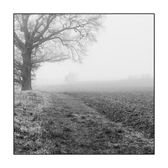 11/100x Square format (neals pics) Tags: 100xthe2018edition 100x2018 image11100 fog winter path field farm farmland countryside rural tree silhouette mystery mud mono monochrome blackandwhite bw my100x–squareformat naturalworld naturallight