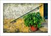 Hay espacios vacíos (V- strom) Tags: concepto concept texturas textures nikon nikon2470 nikond700 nikon105mm viaje travel luz light recuerdo memory macetas pot portugal indanhabella pasamano railing amarillo yelow verde green rojo red detalles details planta blanco white hierro iron vstrom