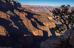 Ridges (Bill Bowman) Tags: grandcanyon pinyonsilhouette stratigraphy shadows redwalllimestone coconinosandstone supaigroup kaibablimestone grandcanyonnationalpark arizona