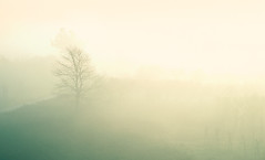 Alba (Maurizio Scotsman De Vita) Tags: natura trunks sunrise plants nature mist plantsflowers nebbia panorama alberi trees piante vegetables alba sunrisesetting italia paesaggio vegetazione tronchi fog landscape vegetali dawn bruma