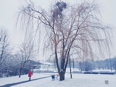 walk in snow (Ola 竜) Tags: winter street candid tree woman walk nature sidewalk snowy landscape building trees snowing architecture cold snowfall snowflakes white snowylawn path branches trashcan stroll walking human redcoat urbannature frosty frozen composition icy weepingwillow