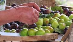 mãos (jakza - Jaque Zattera) Tags: figo fruta mão