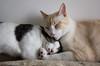 Irmãos (felipe sahd) Tags: city cidade fortaleza ceará brasil nordeste gatos cats felinos