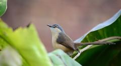 Neat Bird