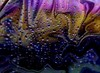 The magic of colours ... (Julie Greg) Tags: macro colours window rain magic romantic weather canon