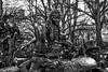Alice in Central Park (jed52400) Tags: statue aliceinwonderland centralpark newyork nyc manhattan blackandwhite