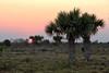 Sunset on Yucatan (Chemose) Tags: mexico mexique yucatán yucatan sunset coucherdesoleil plaine plain hdr canon eos 7d mars march