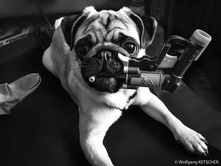 Guard dog !