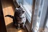 _NCL3396-Edit (chitoroid) Tags: nikond750 nikkor50mmf18g japan hokkaido sapporo cat
