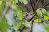 lake katherine. october 2017 (timp37) Tags: palos bird illinois october 2017 lake katherine