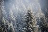 flattnitz01 (Martin Schachermayer) Tags: kärnten flattnitz österreich europa landschaft nebel sonnenaufgang winter schnee bäume carinthia austria europe landscape mist sunrise snow trees hdr nikond600 digital