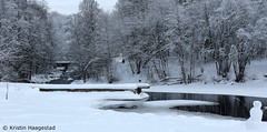 All that white stuff (K. Haagestad) Tags: trees snow river akerselva stilla oslo snowman winter