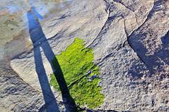 Photographer's Shadow | Binalong Bay, Tasmania (Ping Timeout) Tags: tasmania tassie state australia vacation holiday june 2017 island south commonwealth oz bass strait hobart tas outdoor shadow light landscape rock granite bay fires binalong eddystone stone terrain algae water waterfront jeffrey perspective art plant 1024 wide angle