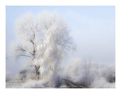 Going North (Tom#201) Tags: pflanzen baum winter österreich eis bauwerk bahngleise natur wien austria building nature tree vienna railtrack at hss