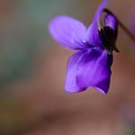 Courbes de violette thumbnail