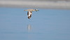 Fascinating Flight... (Anirban Sinha 80) Tags: nikon d610 fx 500mm f4 ed vrii n g bokeh bird inflight wings water wetland beak move
