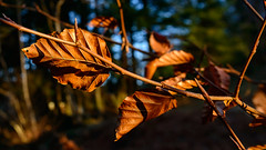 Birnam Wood detail - 9th February 2018-2 (grahamrobb888) Tags: nikon nikond800 nikkor nikkor20mmf18 d800 dunkeld birnamwood birnam bluesky bright shadows shadow scotland perthshire nature natural rural woodland eveninglight evening eveningsun