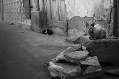 Street cats (heshaaam) Tags: muharraq cats street straycats bahrain