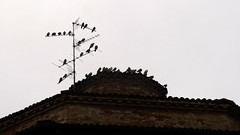 Pigeons meeting point