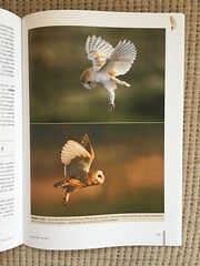 Aves Journal - Barn Owl Photo (Simon Stobart - Back With Loads To Edit) Tags: barn owl tyto alba aves volume 544 december 2017 journal