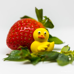 Smile ! (Magda Banach) Tags: canon canon80d sigma150mmf28apomacrodghsm strawberry colors green macro red white yellow yellowduck