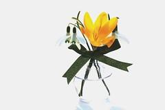 7DWF...Macro/Closeup (Sue Armsby) Tags: 7dwf macro closeup flowers flora flower fleur water bottle bow green highkey snowdrops crocus
