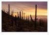 DSCF1029-HDR-Edit_tst1ed.jpg (mug_of_tea) Tags: fuji arizona usa winter xt2 wildwest catcus desert nationalpark western sonoran dusk saguaronationalpark tucson mountains sunset