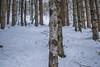 Woods (-mypointofview-) Tags: snow montain montains passo cereda malga fosseta bosco boschi vallata woods wood neve fresca ciapsole ciaspolata